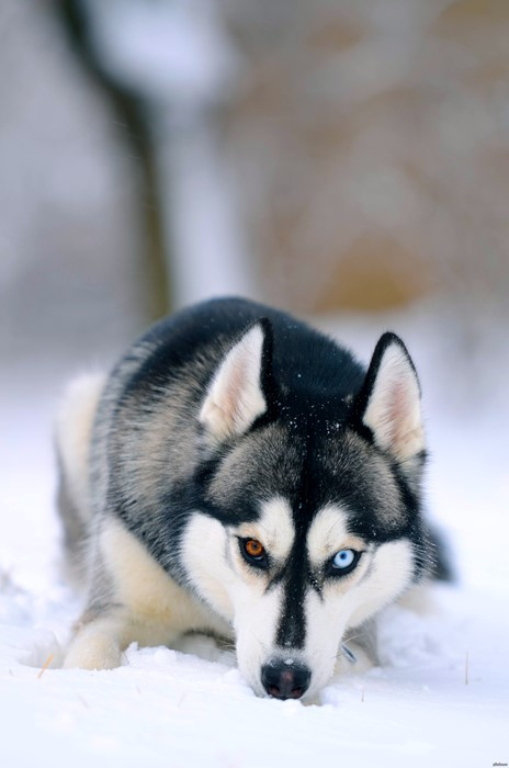 dog mammal cute animal pet frosty snow winter nature puppy