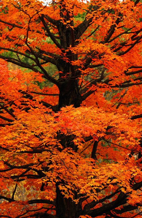 fall autumn leaf maple tree wood nature bright landscape season park