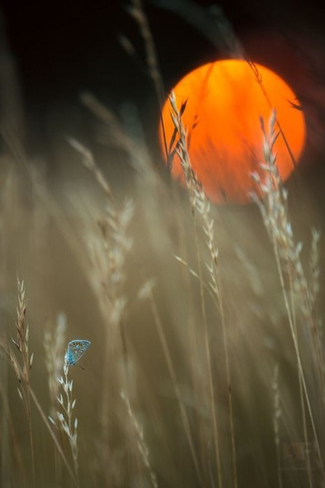 outdoors nature blur summer wheat light fall bright flower water grass