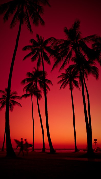 palms beach silhouette tropical exotic sunset tree coconut sun ocean