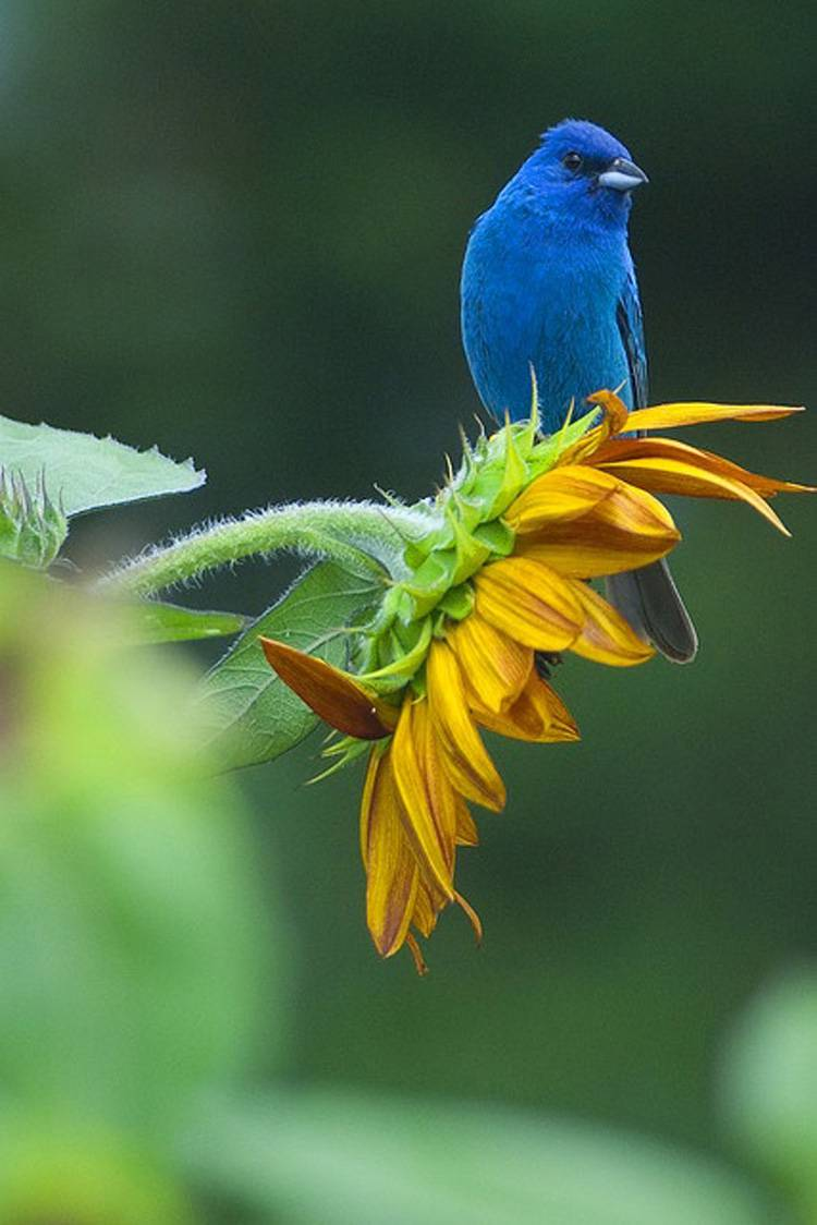 bird wildlife flower wild animal leaf summer blur garden