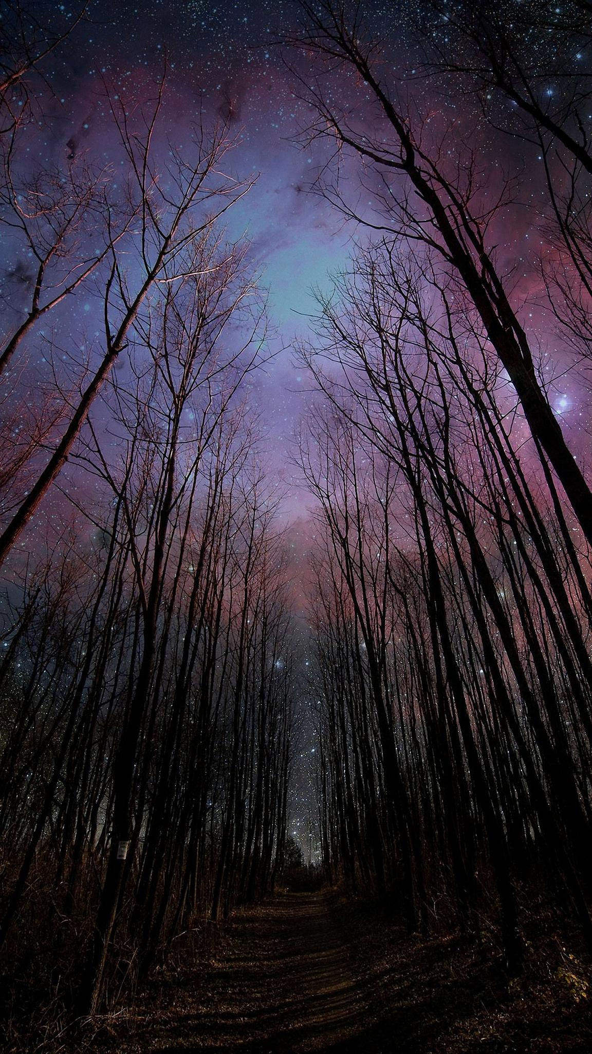forest stars wood tree nature fog dark fall shadow park mystery branch