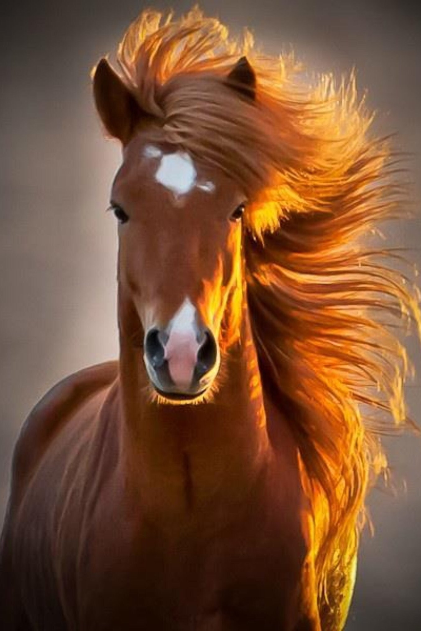 horse animal mammal mane nature mare portrait equine stallion
