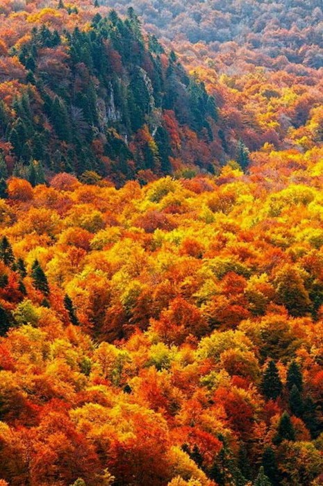 autumn fall leaf wood tree nature maple landscape season color mountain