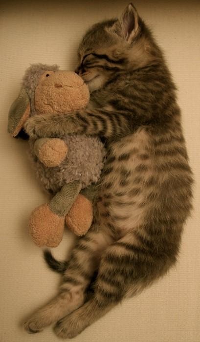 cat mammal downy cute kitten fur animal pet stripe little baby