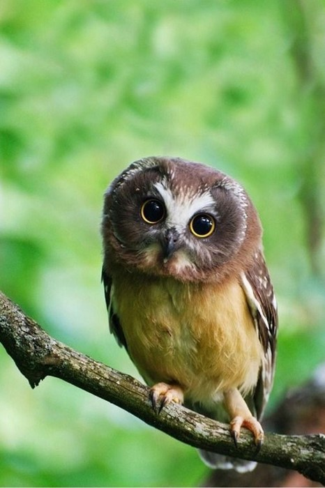 owl wildlife bird nature wild animal beak avian cute little outdoors feather