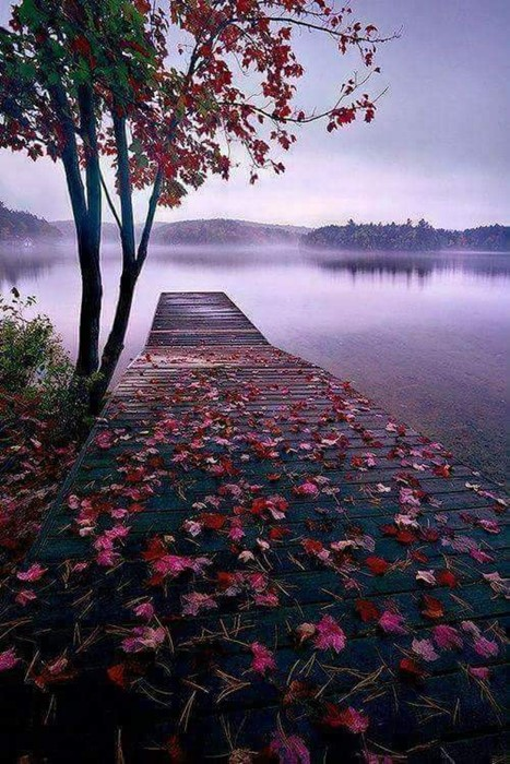 tree landscape leaf dawn fall nature water outdoors lake park color