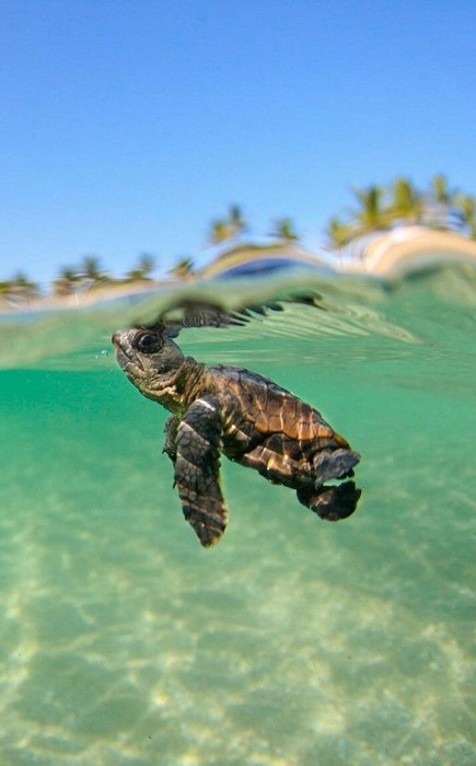 turtle nature reptile outdoors water wildlife summer tropical animal underwater swimming