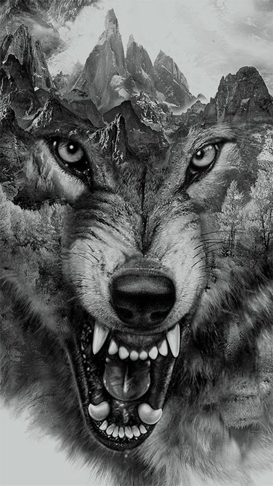 wolf black white animal nature teeth monochrome head scary eye wildlife wild danger