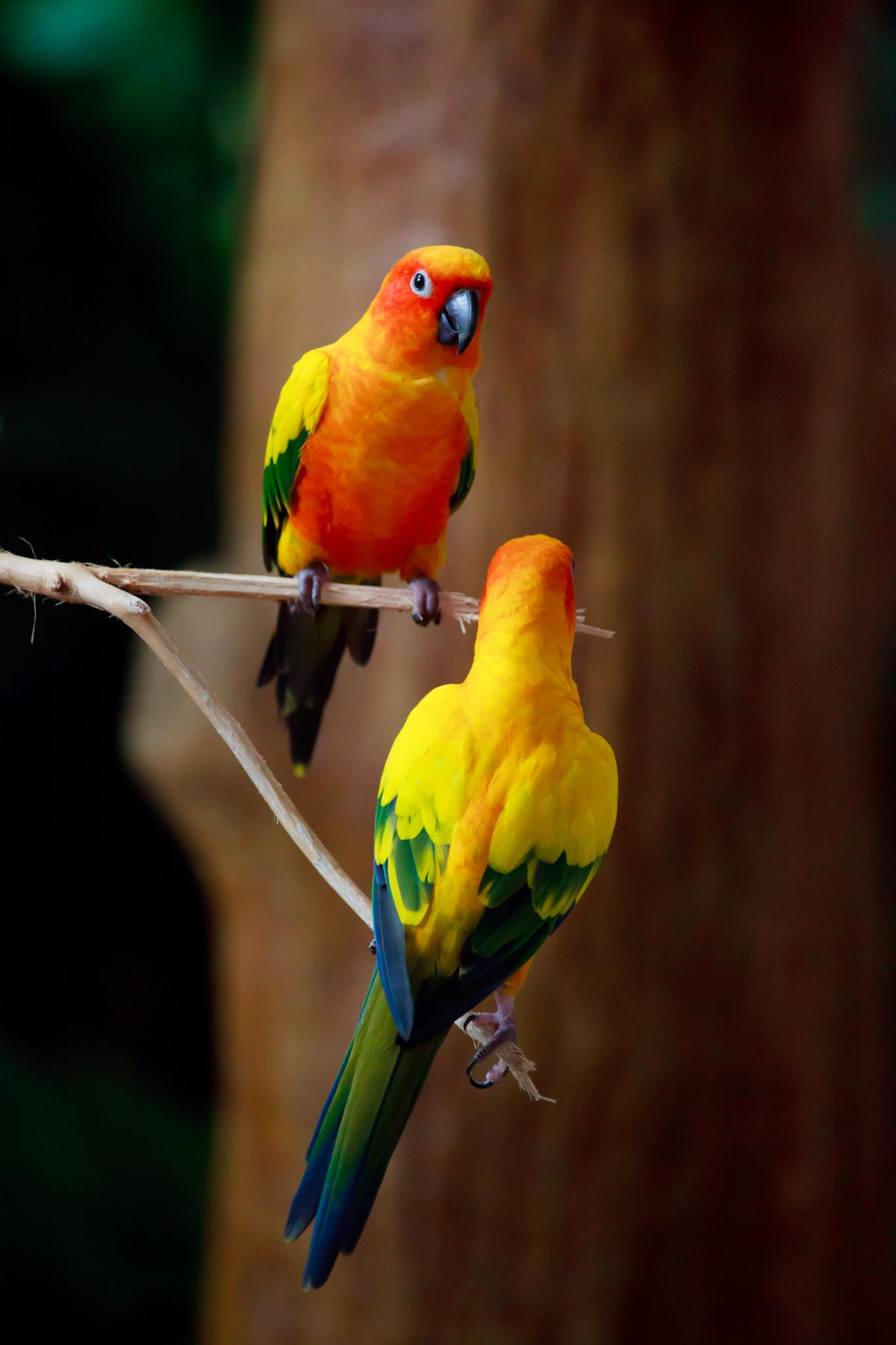 bird parrots eater tree branch colorful animal