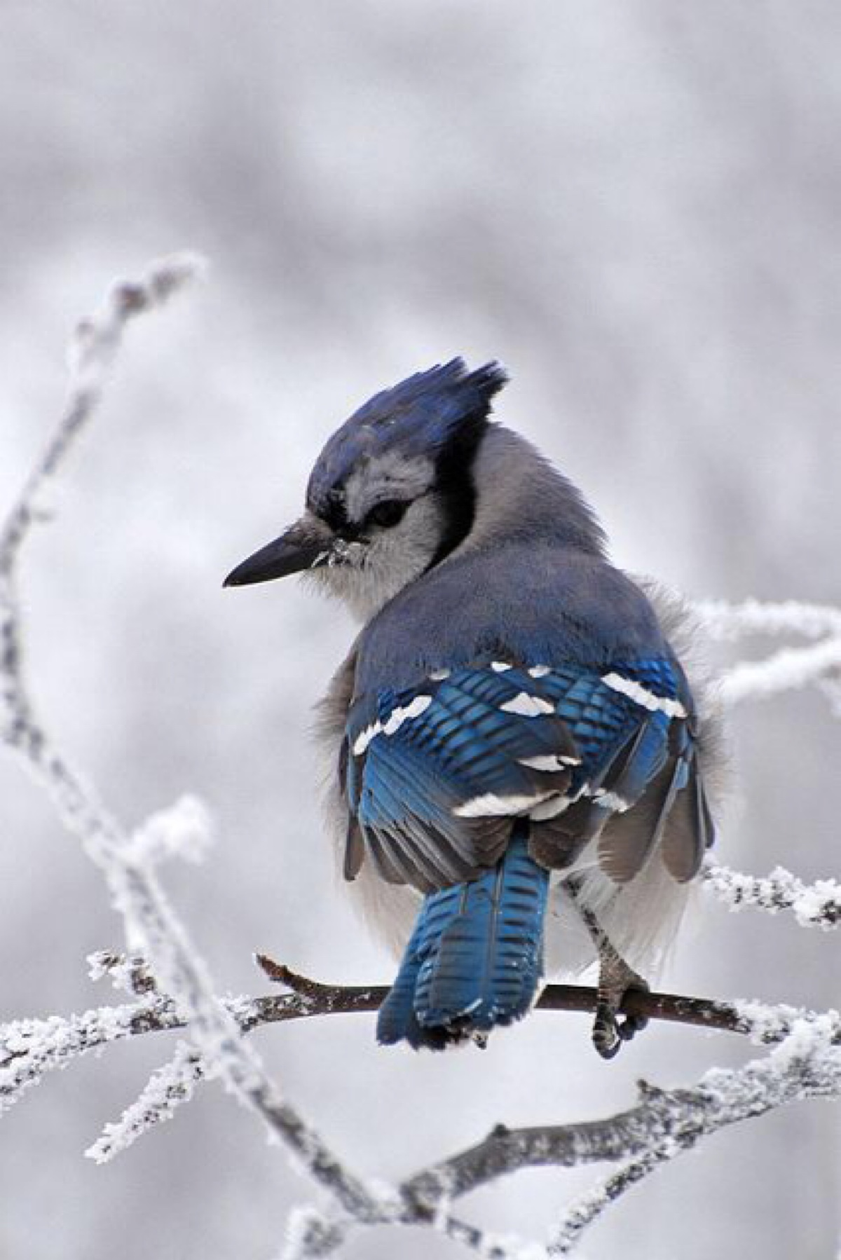 bird wildlife nature winter animal snow cold one wild portrait