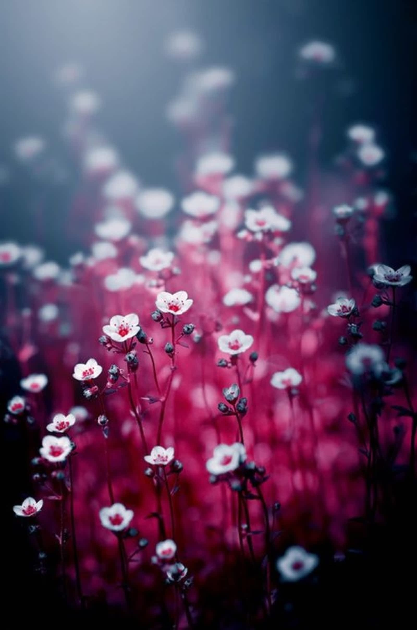 flowers color bright flora nature summer blur desktop abstract garden