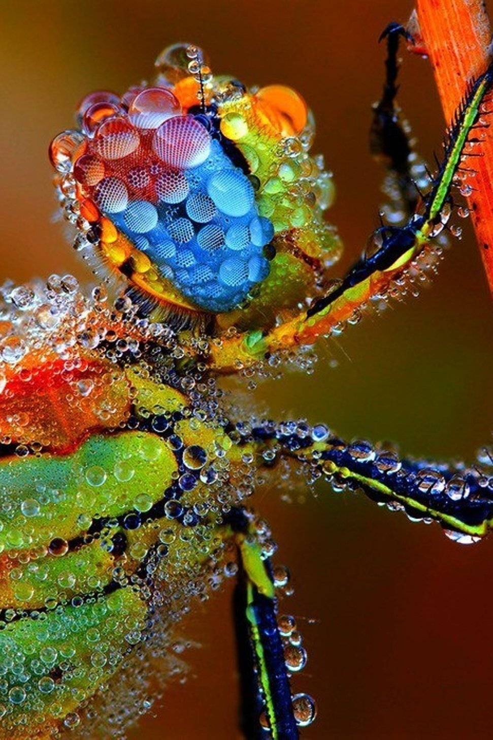 macro insect nature colorful desktop drop closeup