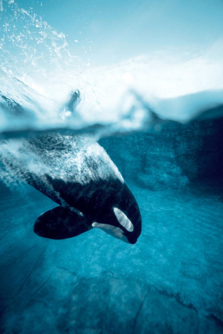 orca water deep ocean sea shark dugong sky killer whale