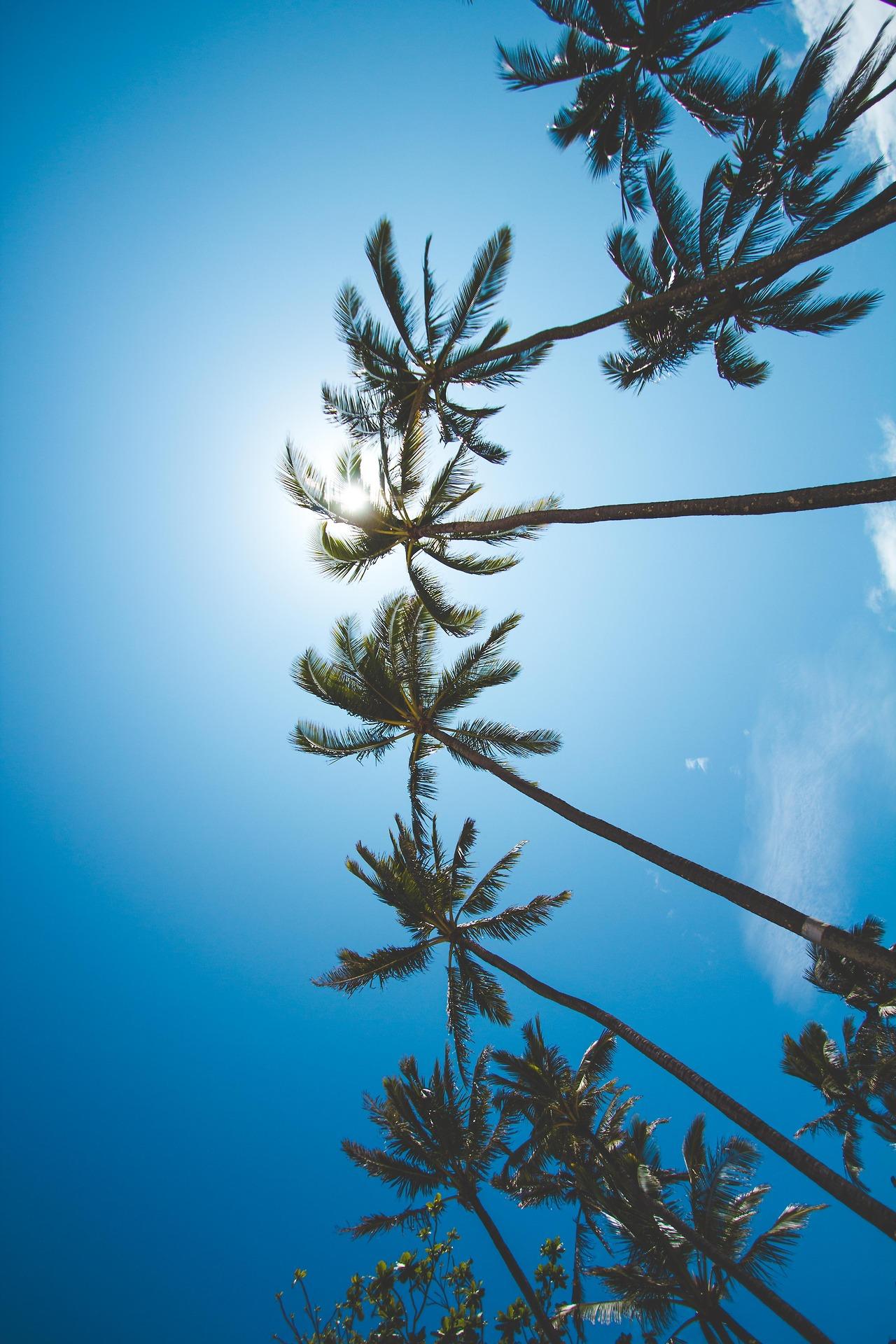 palms tree nature sky season cold light outdoors flora