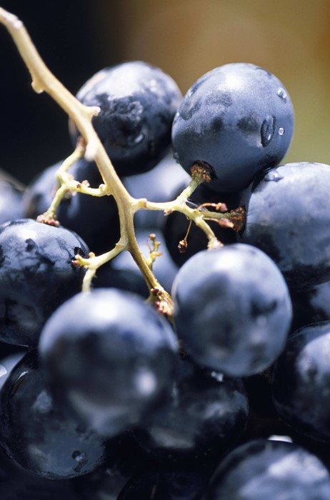 berry macro juicy blueberry bilberry food photo vitamin delicious