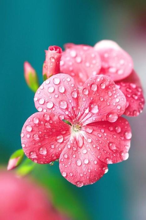 flowers nature flora summer leaf garden drops bright petal color floral