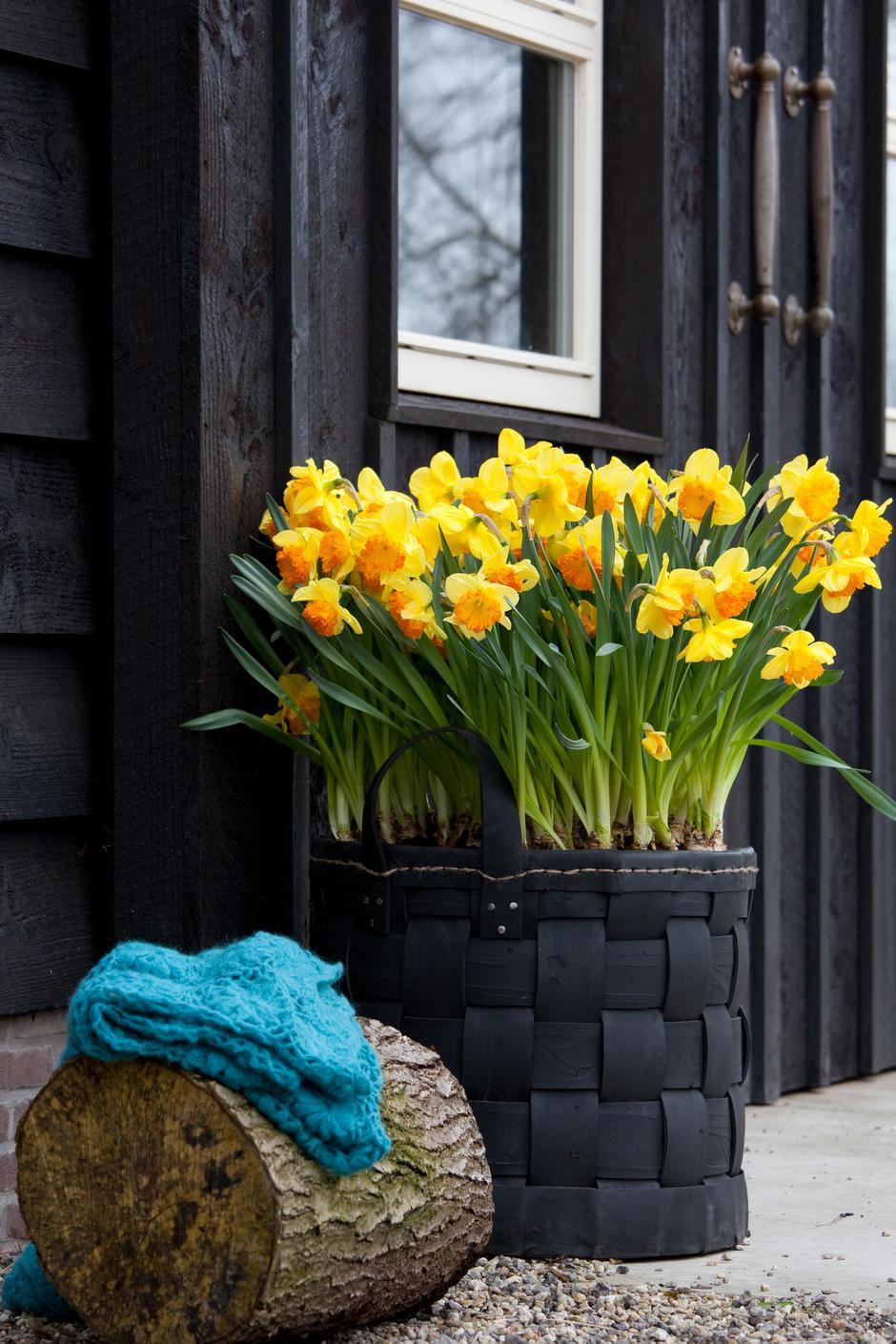 flowers decoration garden color summer flora nature leaf house easter pot