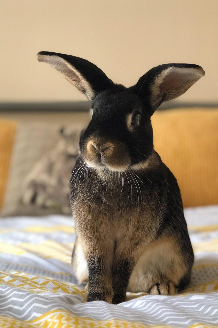 rabbit mammal cute animal fur portrait pet sit bunny hare little