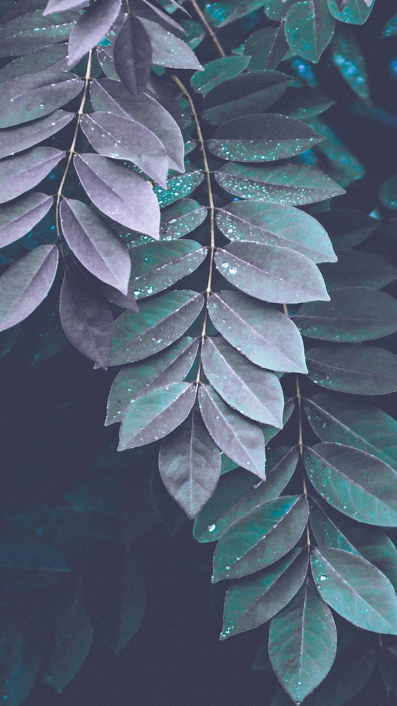 leaf pattern nature bright outdoors light growth flora rain