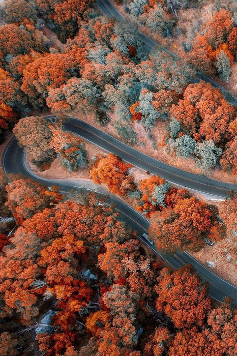 topview autumn road color grow leaf trees forest orange ground fall bright
