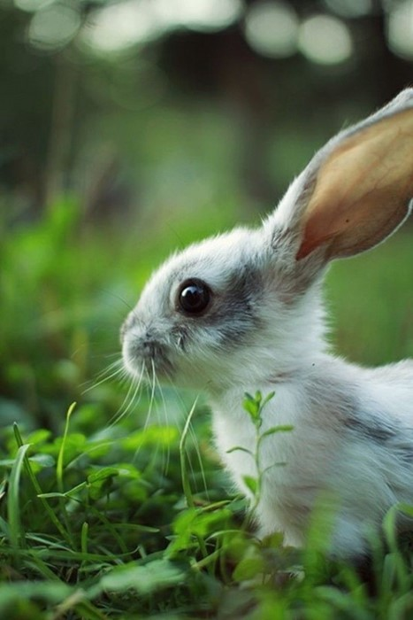 rabbit cute nature little grass animal mammal young wildlife portrait fur downy sit