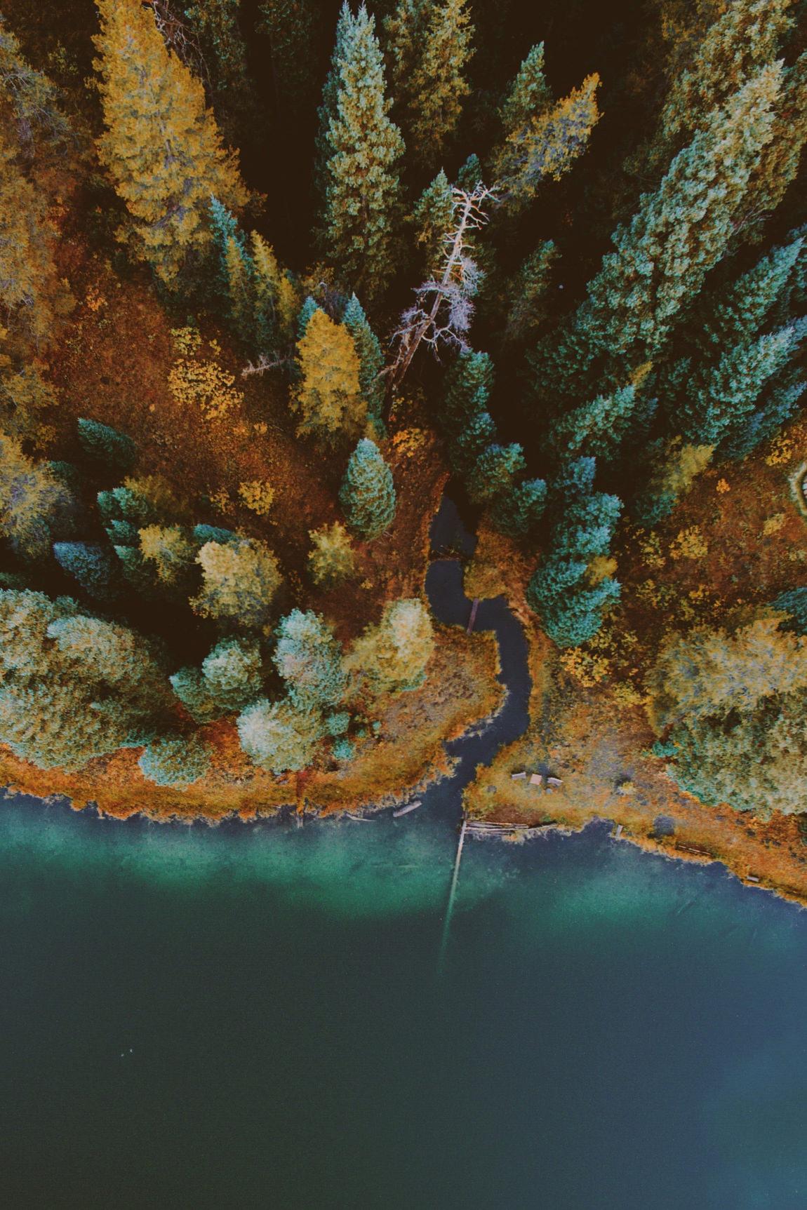 topview ocean sea water reef coral diving marine forest